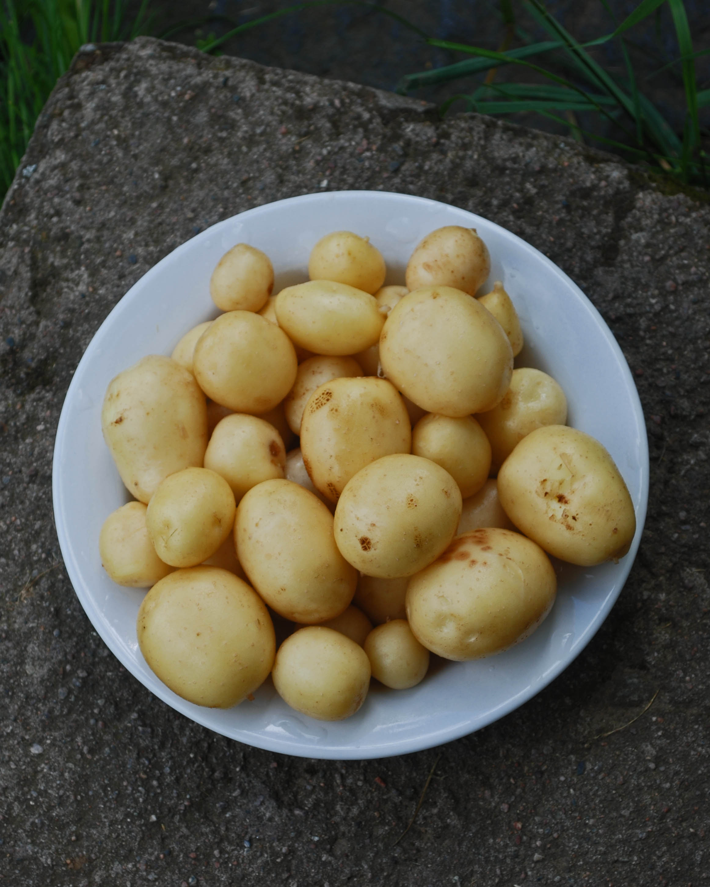 potatis1