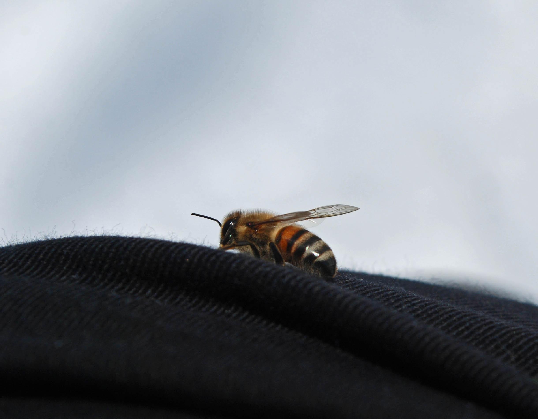bipåben