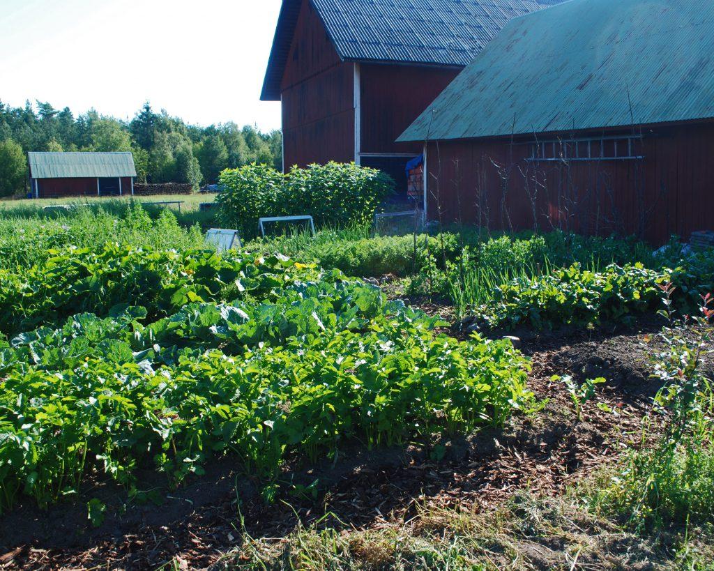 grönsakslandet