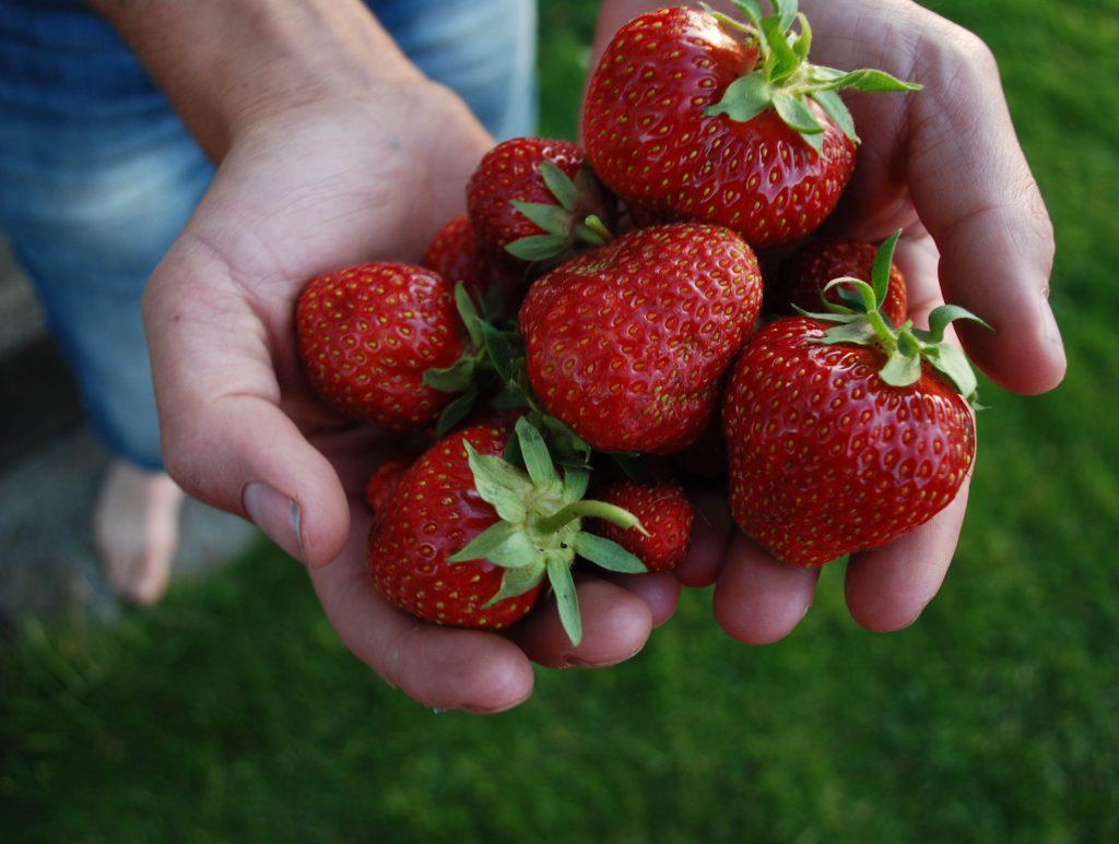 jordgubbar3
