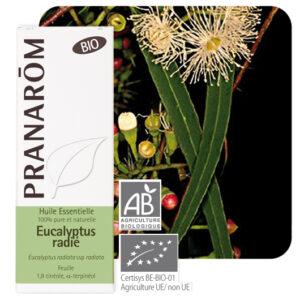Eterisk olja av Eukalyptus Radiata